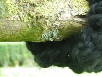 10_grd-essaim-detailblog.jpg