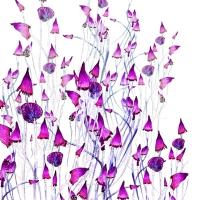 5_champignons-fushias.jpg
